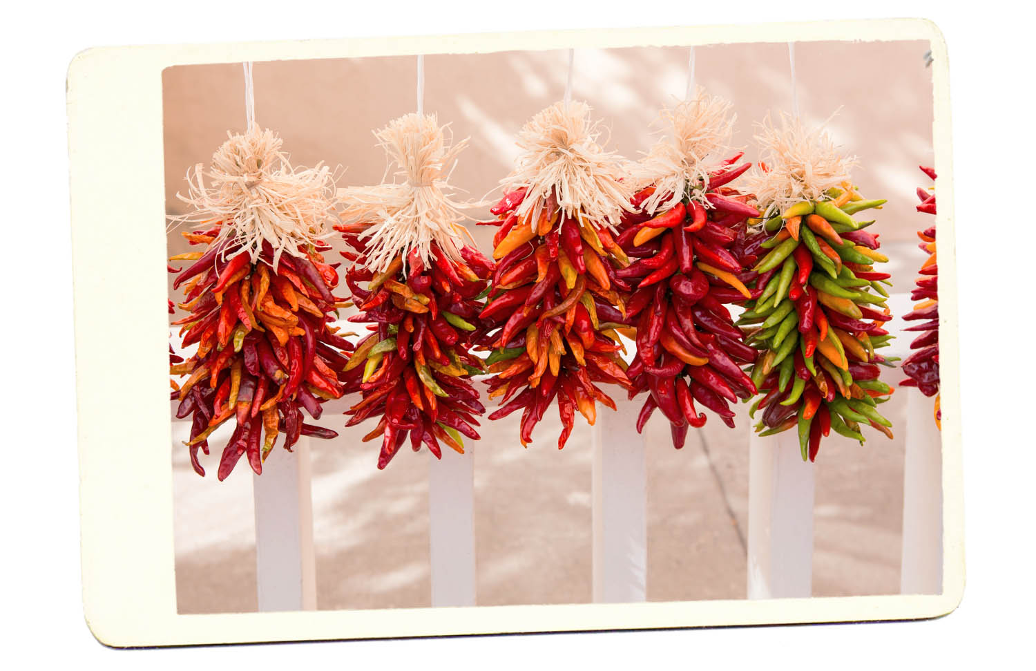 Drying Chili Peppers Santa Fe New Mexico