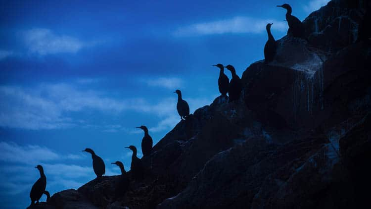 secret things to do in northern ireland | seabirds tour